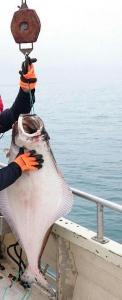 stor fangst